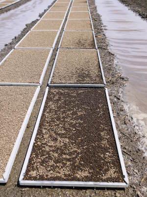 七城米 長尾農園 数量限定で販売中!平成30年度の米作りもスタート!苗床作りを現地取材!_a0254656_17131454.jpg