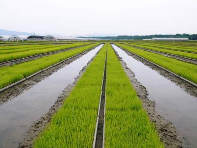 七城米 長尾農園 数量限定で販売中!平成30年度の米作りもスタート!苗床作りを現地取材!_a0254656_17184522.jpg