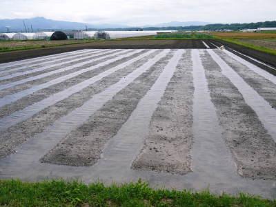 七城米 長尾農園 数量限定で販売中!平成30年度の米作りもスタート!苗床作りを現地取材!_a0254656_17242247.jpg