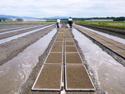 七城米 長尾農園 数量限定で販売中!平成30年度の米作りもスタート!苗床作りを現地取材!_a0254656_17301592.jpg