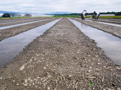 七城米 長尾農園 数量限定で販売中!平成30年度の米作りもスタート!苗床作りを現地取材!_a0254656_17313343.jpg
