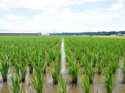 七城米 長尾農園 数量限定で販売中!平成30年度の米作りもスタート!苗床作りを現地取材!_a0254656_17491415.jpg
