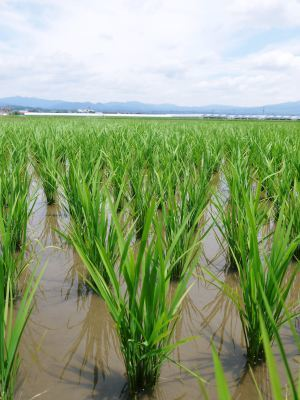 七城米 長尾農園 数量限定で販売中!平成30年度の米作りもスタート!苗床作りを現地取材!_a0254656_17512418.jpg