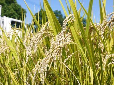七城米 長尾農園 数量限定で販売中!平成30年度の米作りもスタート!苗床作りを現地取材!_a0254656_17533349.jpg