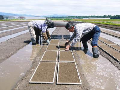 七城米 長尾農園 数量限定で販売中!平成30年度の米作りもスタート!苗床作りを現地取材!_a0254656_18015909.jpg