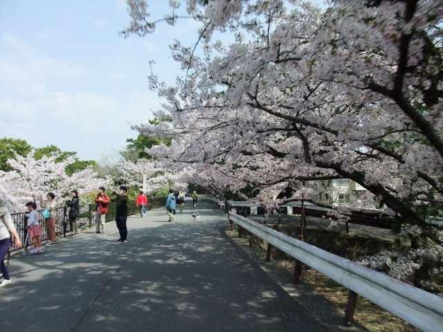 桜・お花見&パン屋さん巡りライド_d0174462_18483164.jpg