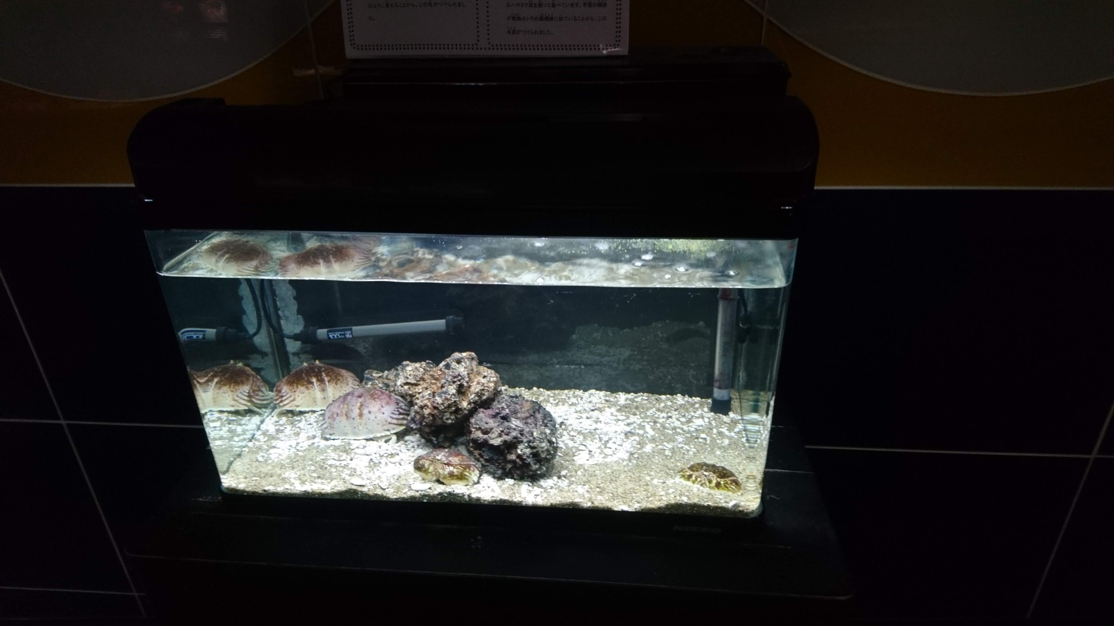 サンピアザ水族館_b0106766_18253972.jpg