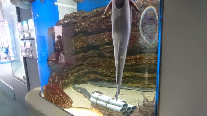 サンピアザ水族館_b0106766_18254091.jpg