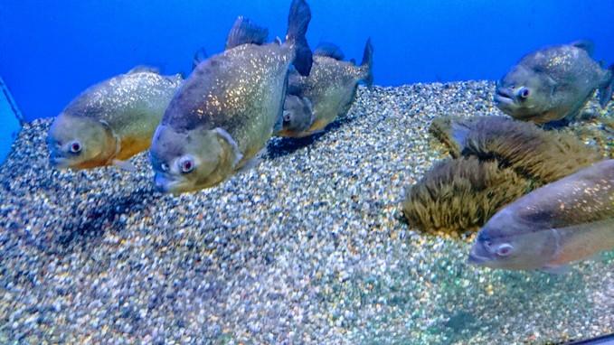 アザラシもいるサンピアザ水族館_b0106766_1830403.jpg