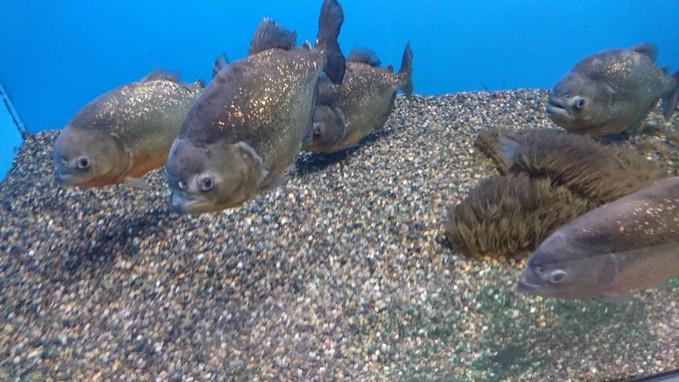 アザラシもいるサンピアザ水族館_b0106766_18304238.jpg