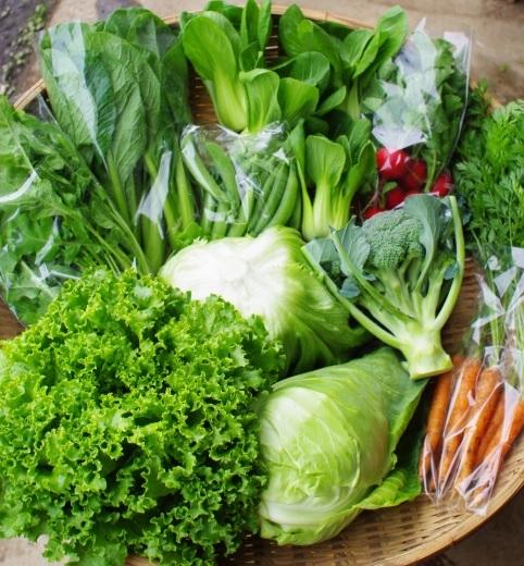 今週の野菜セット(5/29~6/2着)_c0110869_12340331.jpg