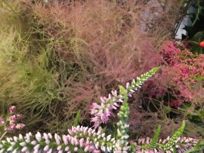 オークリーフ(スグリと紫陽花)_f0049672_16581955.jpg