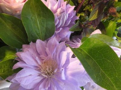 オークリーフ(スグリと紫陽花)_f0049672_16584358.jpg