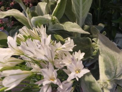 オークリーフ(スグリと紫陽花)_f0049672_16585702.jpg
