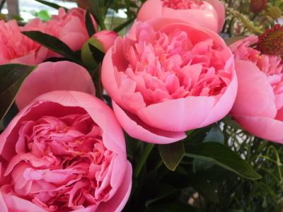 オークリーフ(スグリと紫陽花)_f0049672_16594801.jpg