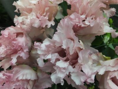 オークリーフ(スグリと紫陽花)_f0049672_17005191.jpg