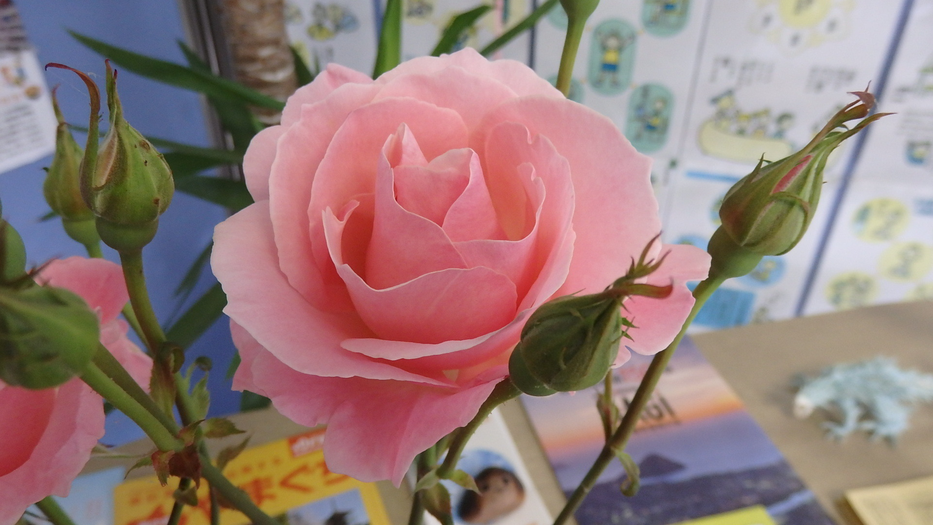 お花はココロのビタミン(^o^)_b0239402_18180384.jpg