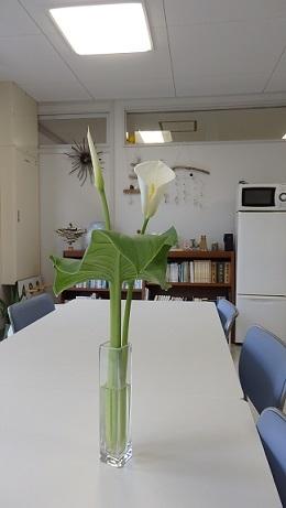お花はココロのビタミン(^o^)_b0239402_18211043.jpg