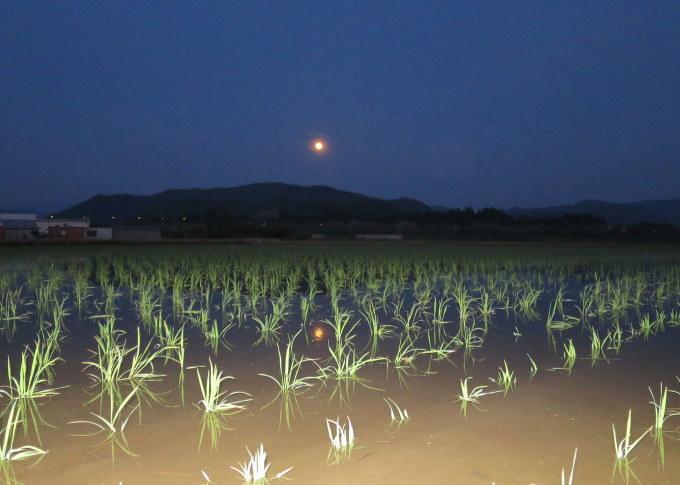 月夜_a0214206_20300591.jpg