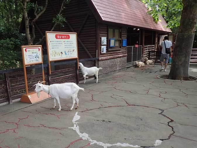 千葉市動物公園~子ども動物園の動物たち:げんのすけ!_b0355317_22035341.jpg