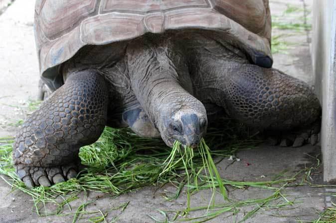 千葉市動物公園~子ども動物園の動物たち:げんのすけ!_b0355317_22101601.jpg