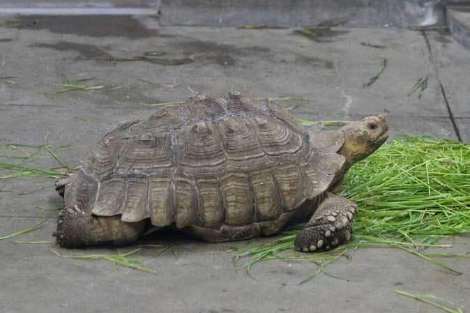 千葉市動物公園~子ども動物園の動物たち:げんのすけ!_b0355317_22103902.jpg
