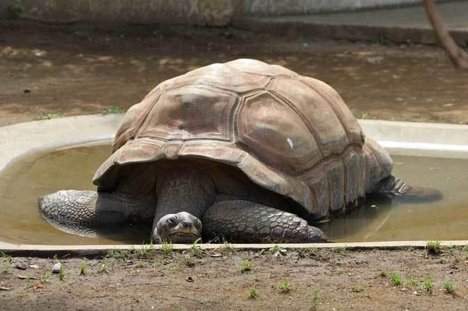 千葉市動物公園~子ども動物園の動物たち:げんのすけ!_b0355317_22104787.jpg