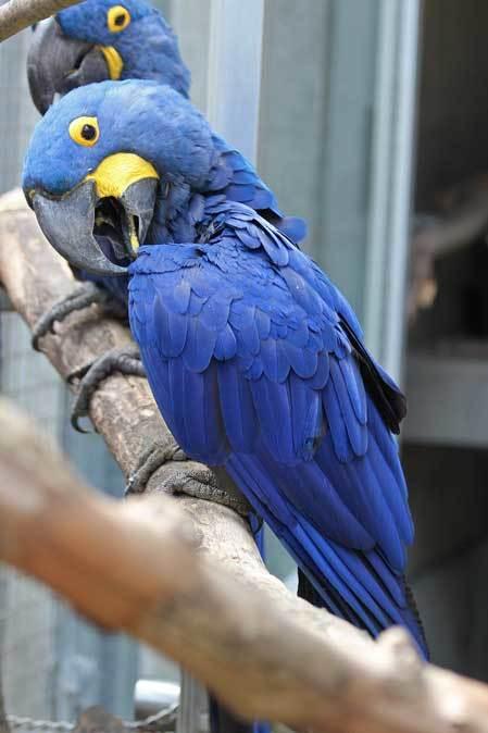 千葉市動物公園~子ども動物園の動物たち:げんのすけ!_b0355317_22140098.jpg