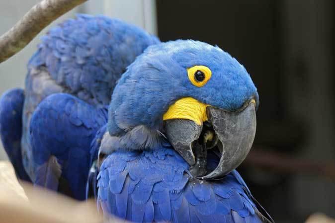 千葉市動物公園~子ども動物園の動物たち:げんのすけ!_b0355317_22161338.jpg
