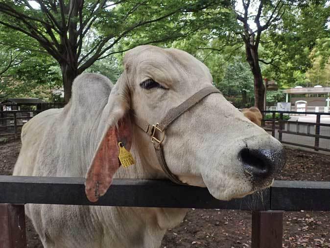 千葉市動物公園~子ども動物園の動物たち:げんのすけ!_b0355317_22192958.jpg