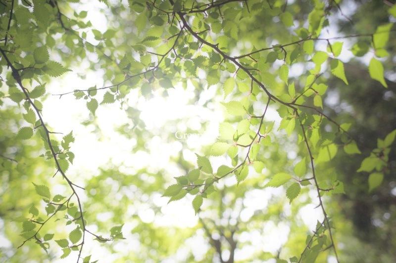 新緑の丹沢へ_f0321522_10133739.jpg