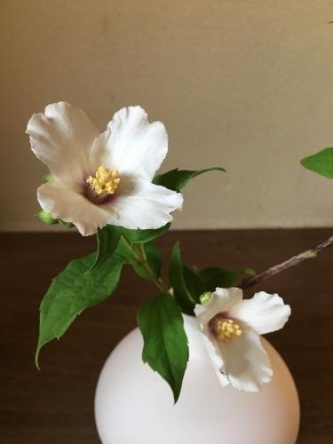 香りの良いベルエトワールというウツギ_a0197730_14074999.jpg