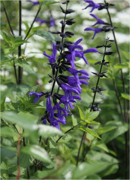 庭の花_a0256349_19263018.jpg