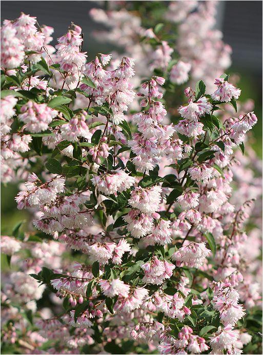 庭の花_a0256349_1926386.jpg