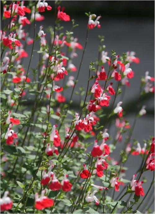 庭の花_a0256349_19265244.jpg