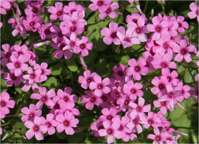 庭の花_a0256349_1927185.jpg