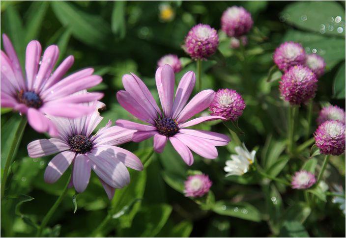 庭の花_a0256349_762159.jpg