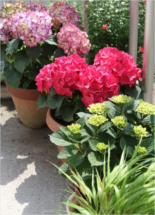 庭の花_a0256349_763525.jpg
