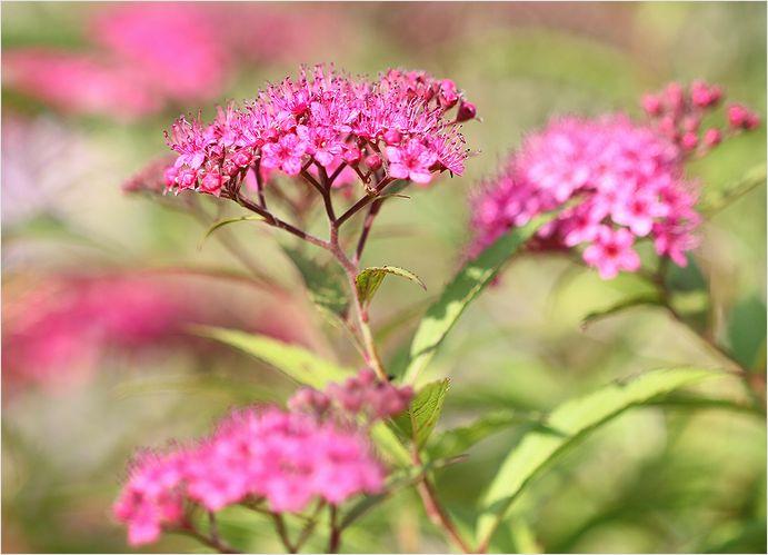 庭の花_a0256349_77323.jpg