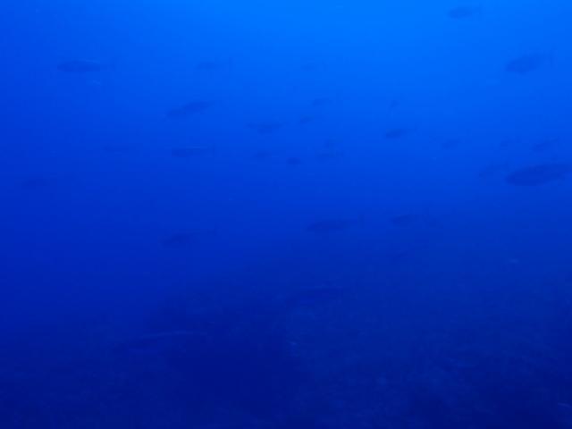 5月29日 海も陸激アツです_d0113459_18142798.jpg