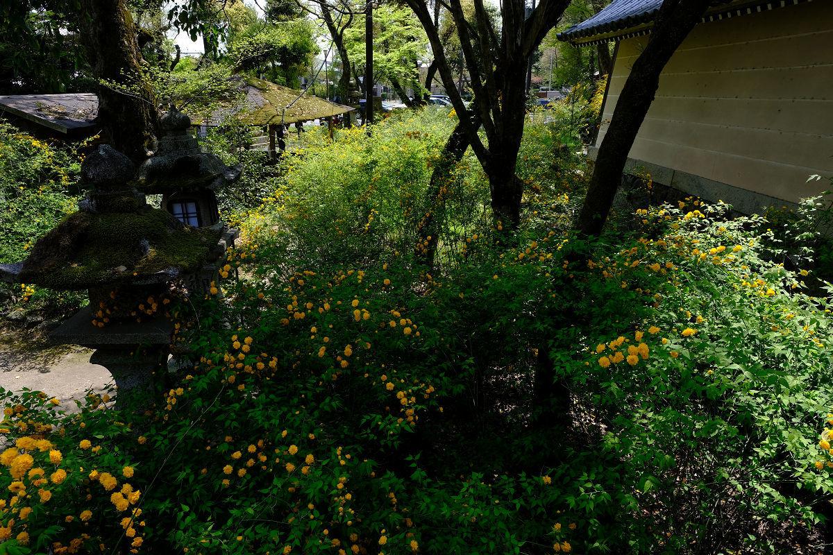 松尾大社_f0021869_22380902.jpg