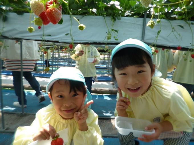 楽しかった!~イチゴ狩り 芋苗植え~_f0195982_16232277.jpg