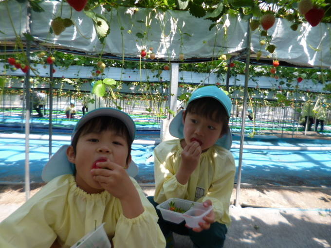 楽しかった!~イチゴ狩り 芋苗植え~_f0195982_17213878.jpg