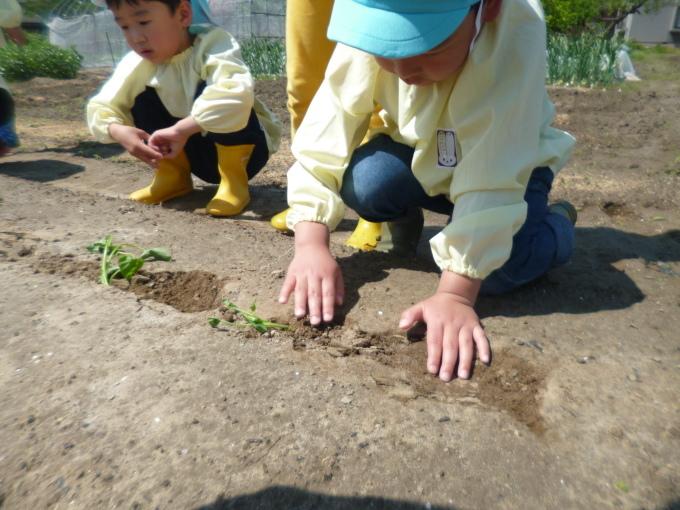 楽しかった!~イチゴ狩り 芋苗植え~_f0195982_17301421.jpg