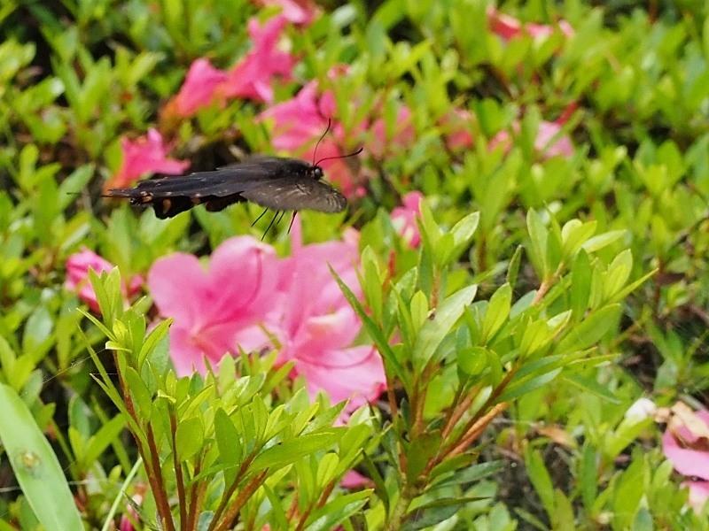 今年もトリは千葉県の公園で_f0310988_21383425.jpg