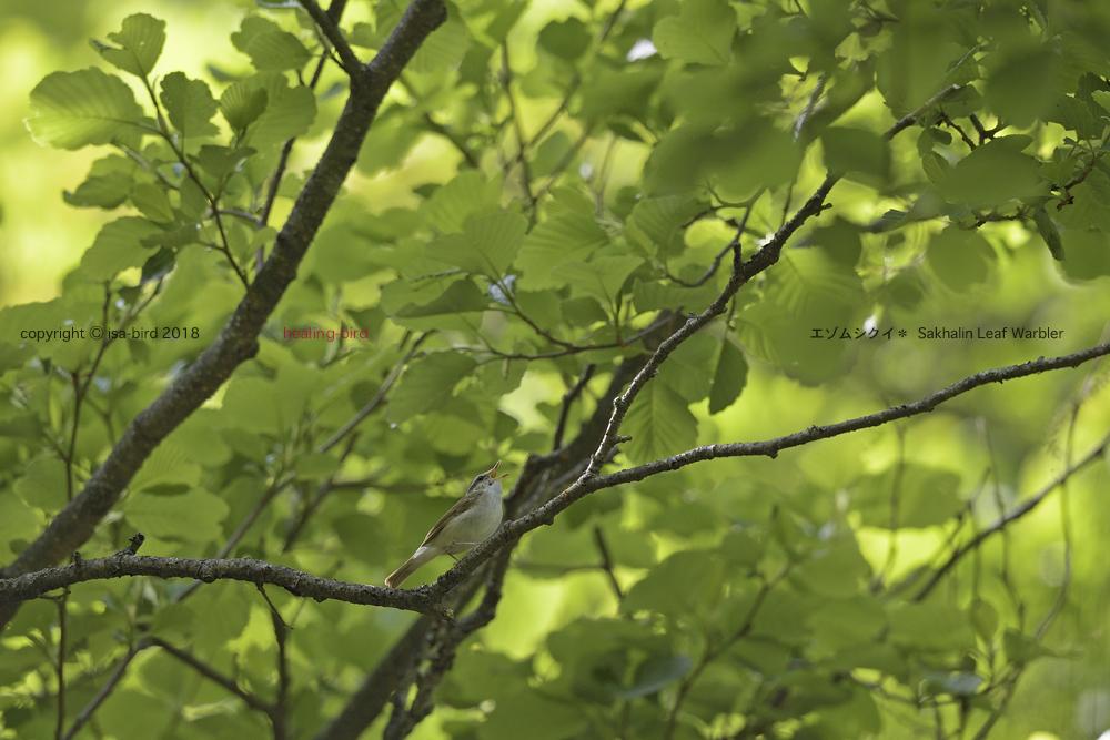 道すがら出会えた鳥たち_d0164892_23223581.jpg