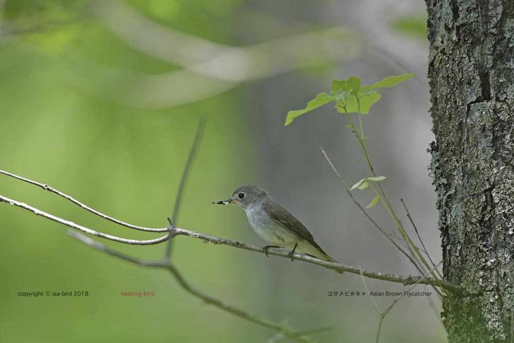 道すがら出会えた鳥たち_d0164892_23223851.jpg