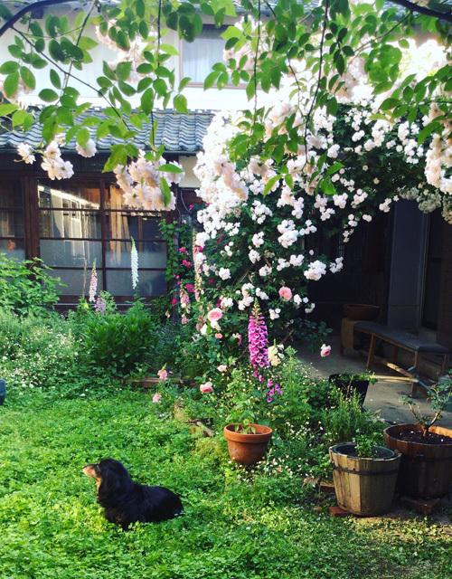 バラの庭より日々のこと。_d0077603_15175354.jpg