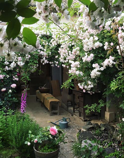 バラの庭より日々のこと。_d0077603_15180864.jpg