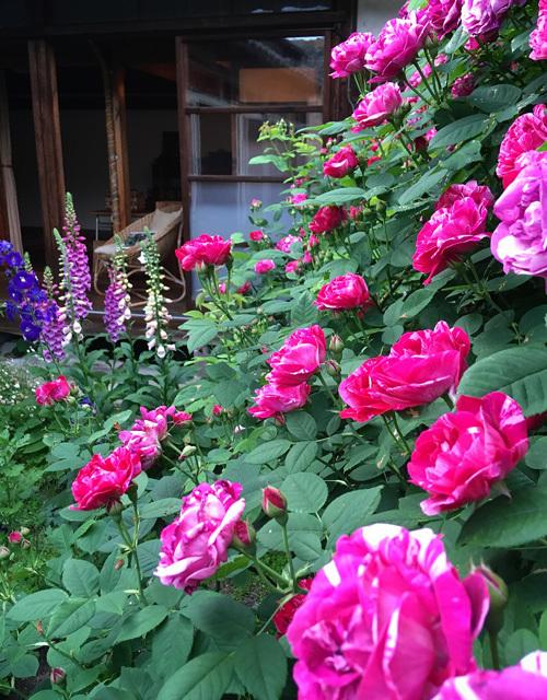バラの庭より日々のこと。_d0077603_15184568.jpg